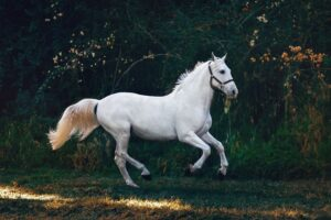 Horse adaptogen supplement
