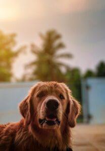 dog immune support through adaptogens