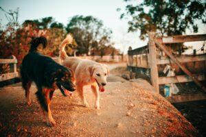 adult dogs adaptogen treatment
